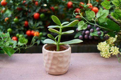 Nejoblíbenější pokojové rostliny. Jednu z nich jistě máte doma