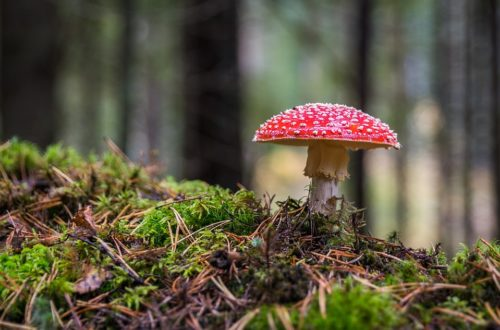 I jedovaté houby zase rostou. Poznáte případnou otravu?