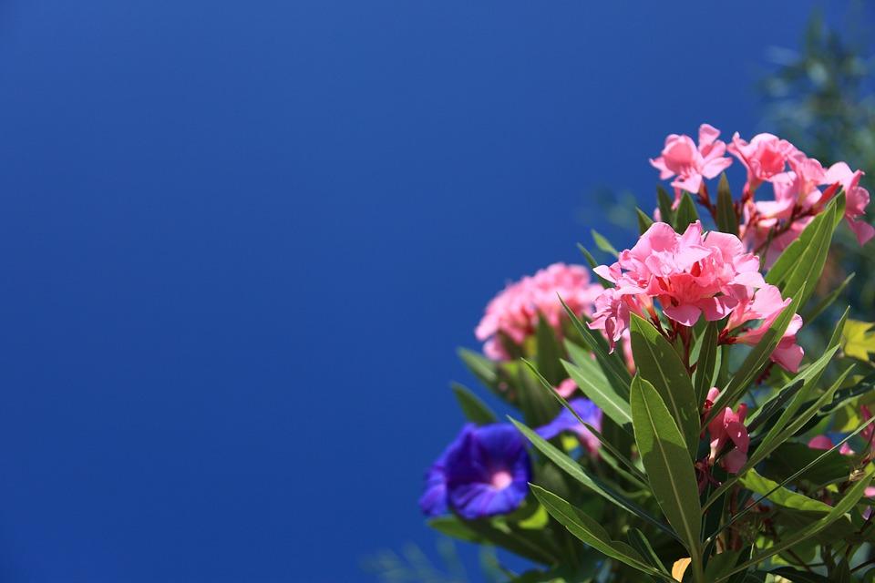 Rostliny, které nepatří do rodinných domácností z důvodu jedovatosti